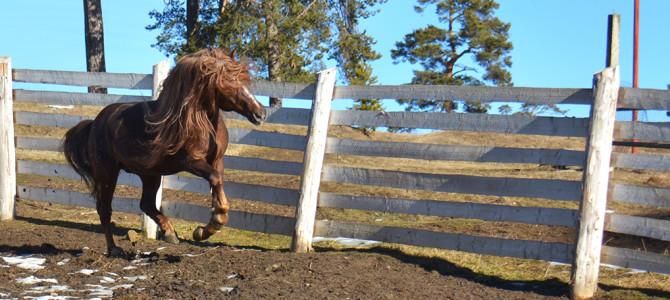 Herghelia Lucina- Leaganul calului Hutul